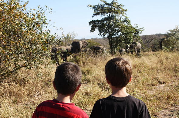 Kids observing elephant at the fence.