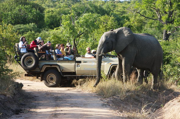 Close encounters with elephant on a game drive in Kapama Private Game Reserve.