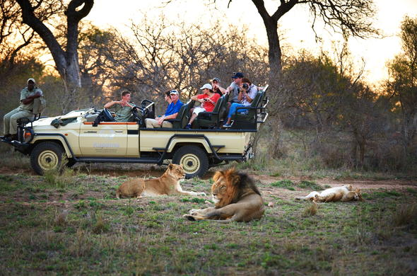 Lion sighting on action-packed game drives in Kapama Private Game Reserve.