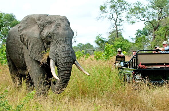 Embark on game drives to see wildlife up close.