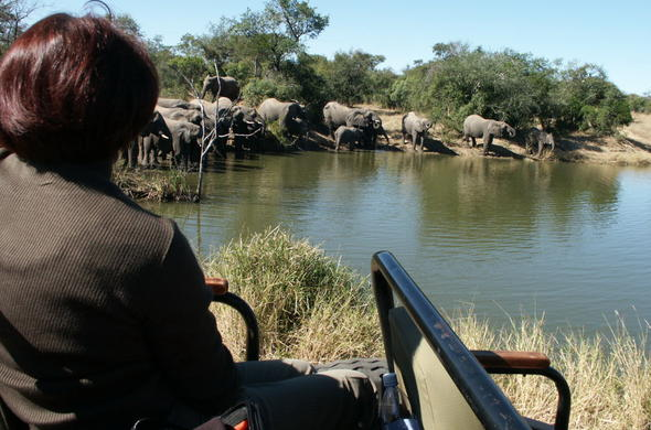 Observe elephants on game drives.